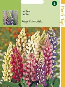 Lupinus polyphyllus Russell's Hybrids (zaad Lupine)