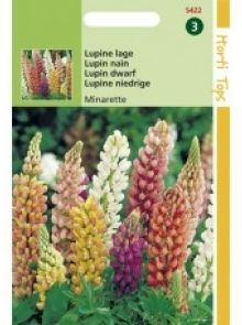 Lupinus polyphyllus Minarette (zaad lage Lupine)