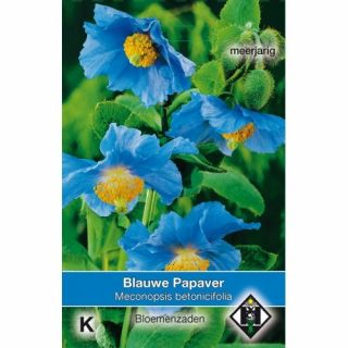 Meconopsis betonicifolia (zaad blauwe Papaver, Klaproos)