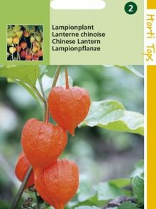 Physalis franchetti (zaad Lampionplant)