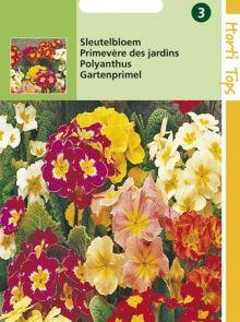 Primula elatior (zaad Sleutelbloem kleurenmengsel)