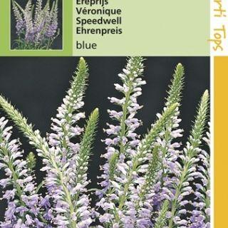 Veronica spicata (zaad Ereprijs)