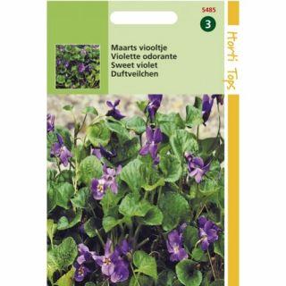 Viola odorata (zaad Maarts viooltje)