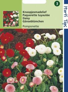 Bellis perennis Pomponette (zaad Knoopjes-madeliefje)