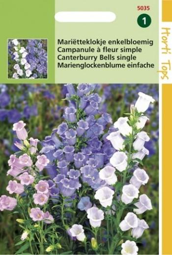 Campanula medium (zaad Mariëtteklokje, klokjesbloemen)