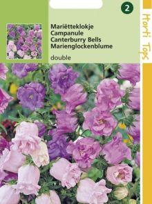 Campanula calycanthema (zaad Kop en schotel, kleurenmengsel)