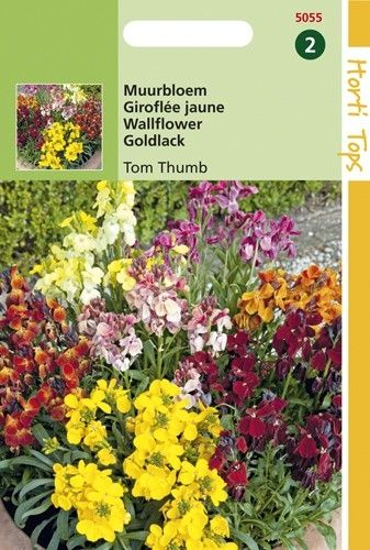 Cheiranthus cheirii Tom Thumb (zaad Muurbloemen compact mangsel)