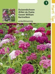 Dianthus barbatus (zaad Duizendschoon kleurenmengsel enkelbloemig)