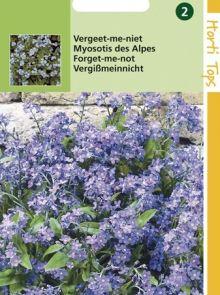Myosotis alpestris (zaad Vergeet-me-nietje)