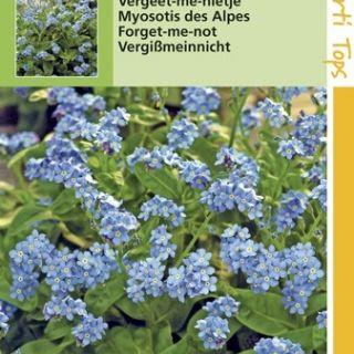 Myosotis Blue Ball (zaad indigoblauwe Vergeet-me-nietje)