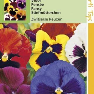 Viola wittrockiana (zaad Viool Zwitserse Reuzen)