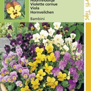 Viola cornuta Bambini (zaad Hoornviooltje, kleinbloemige viool)
