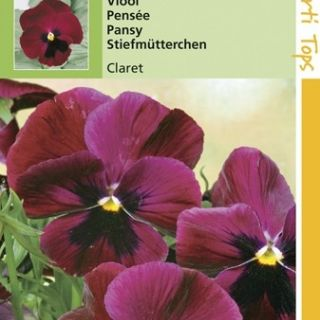 Viola wittrockiana Claret (zaad wijnrode viool)