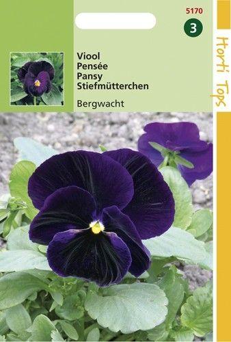 Viola wittrockiana Berna (zaad Violetblauwe viool)