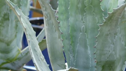 Kuipplanten (Tuinplanten voor in een plantenbak of bloembak)