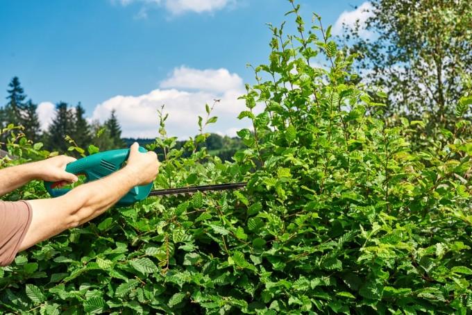 Over dikke en dunne hagen