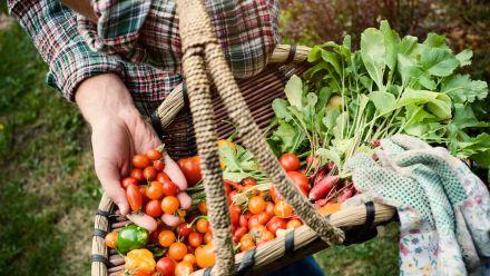 Biologisch geteelde groente en kruiden zaden