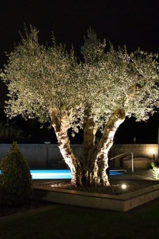 Wat licht doet voor uw tuin