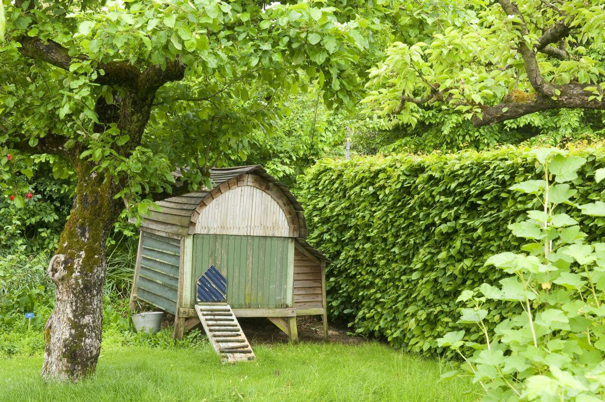 Bomen In Tuin : Tuin met boomgaardgevoel! de tuinen van appeltern