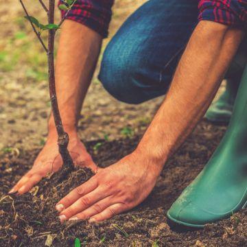 De 6 meest gestelde vragen over bomen!