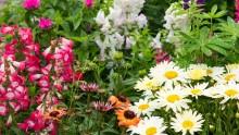 Een bosje bloemen uit eigen tuin!