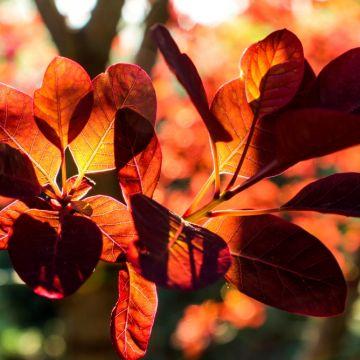 Kleurrijke herfstheesters!