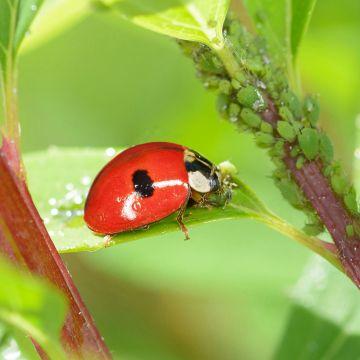 Ziekten en plagen op natuurlijke manier bestrijden