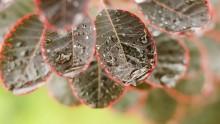 Mooie donkerbladige planten!