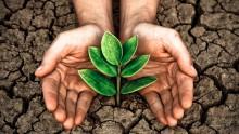 Welke planten groeien op kleigrond, zandgrond of zavelgrond?