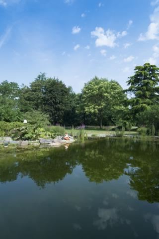 Tuin met zwemvijver