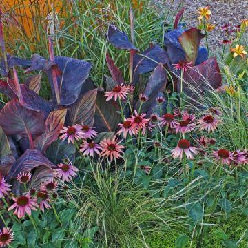 Tips voor de inrichting van een vaste planten border