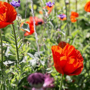 Wilde bloemenzaden in je tuin?