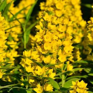 Altijd al een wilde bloementuin willen hebben?