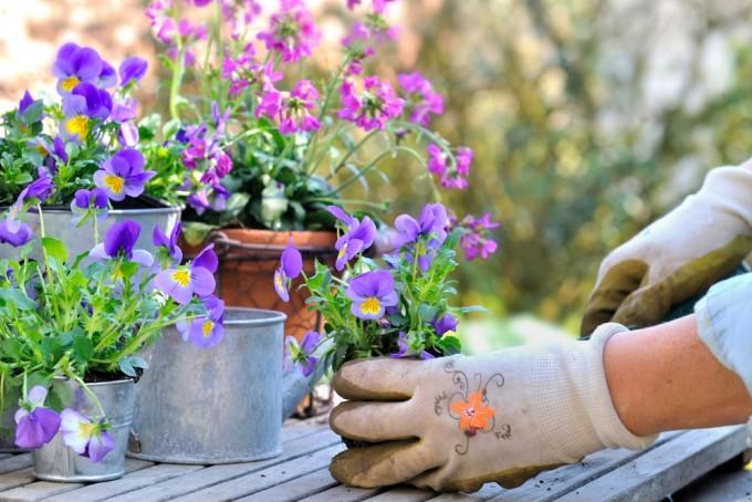 Kom naar het pot- en terrasplantenweekend!