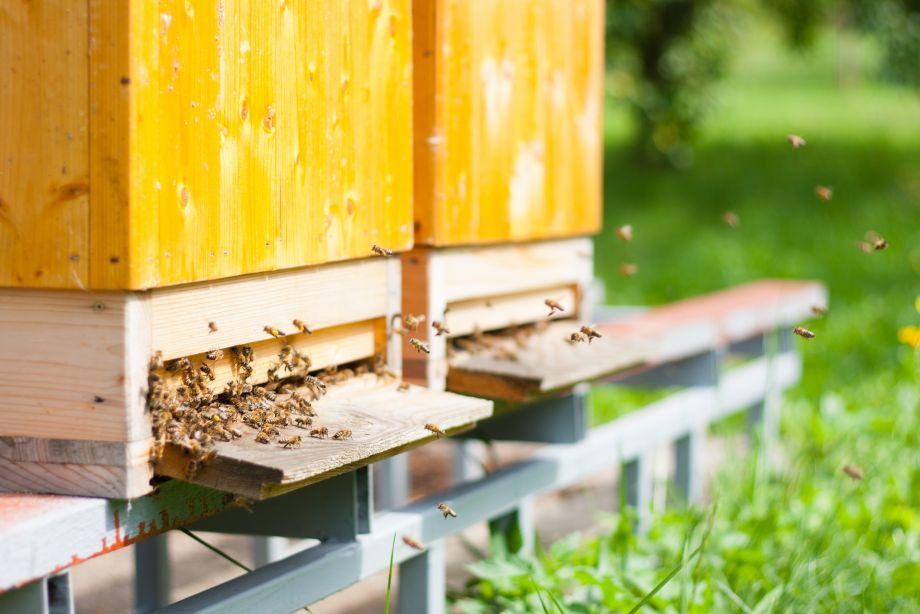 De Bijenstal