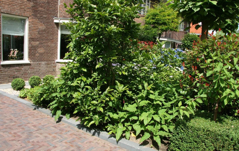 Beplanting voortuin Arnhem