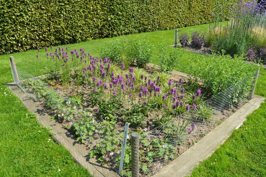 Sterke planten border