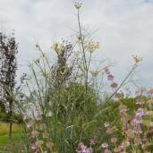 Border met weefplanten