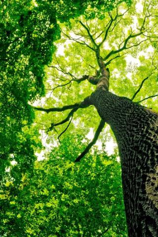 Bomen over luchtvervuiling