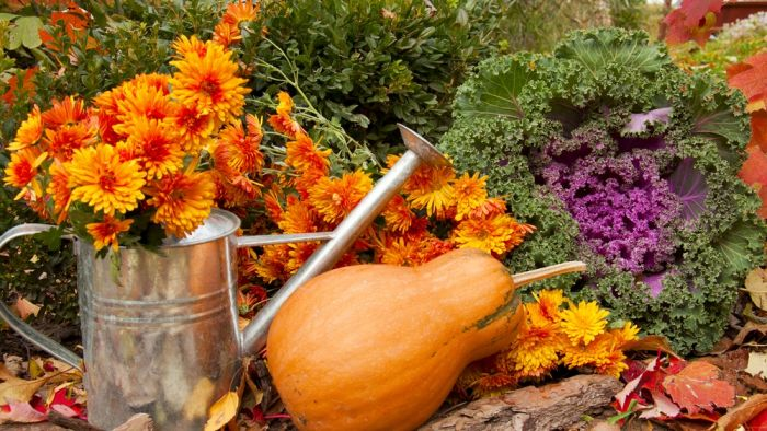 Tuintips voor de maand oktober!