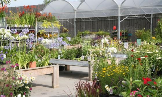 Opening nieuwe plantenmarkt