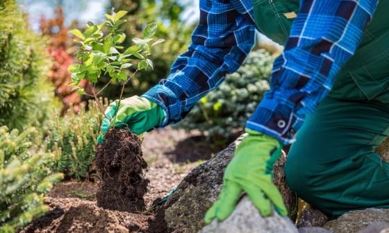 Workshop: De makkelijke tuin!