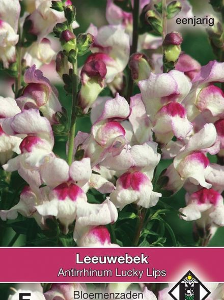 Antirrhinum majus maximum Lucky Lips (zaad, wit met rode Leeuwenbek, art. 33255)
