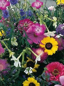 Tuinboeket voor vlinders (zaden Eenjarige bloemenmengsels, art.36305)