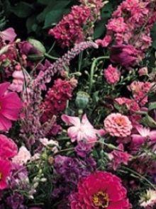 Tuinboeket in lila-roze (zaden bloemenmengsels, plukbloemen, art. 36316)