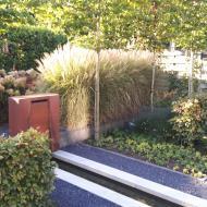 Strakke tuin 's-Hertogenbosch