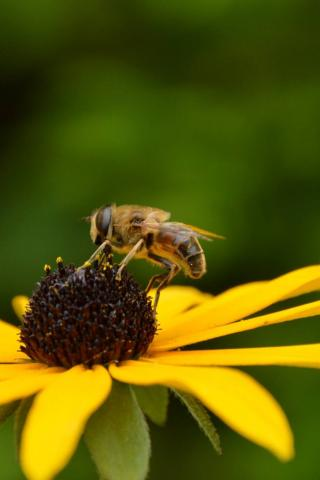 Plantgezondheid en biologische bemesting