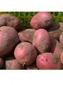 Alouette pootaardappelen (1 kg, redelijk vastkokende aardappel)