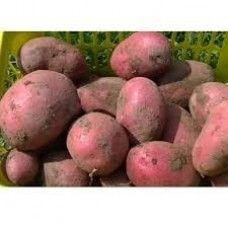 Alouette pootaardappelen (5 kg, redelijk vastkokende aardappel)