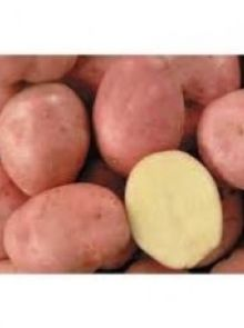 Desiree pootaardappelen (2,5 kg, friet aardappel)